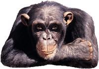 Monkey cool